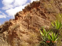 Eroded laterite overlying paler saprolite (foliation visible dipping to right)