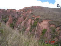 Eroded septae in side wall of lavaka, preserving the former hillslope surface on their grassy tops.
