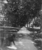 Dog on Main Street, 1897